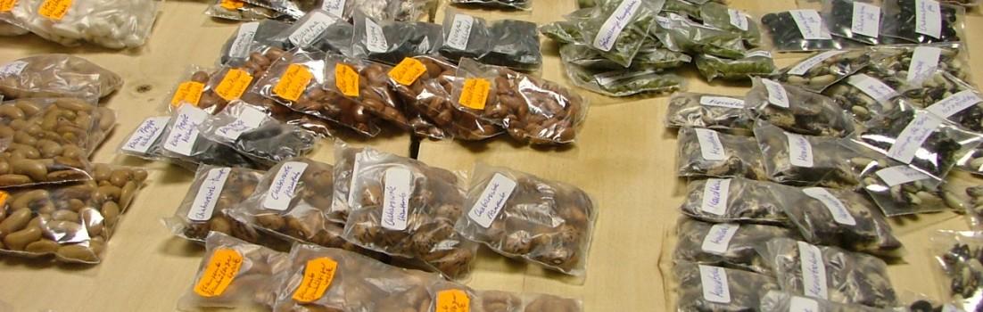Bohnensaatgut auf der Tauschbörse