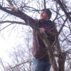 Wesensgemäßer Obstbaumschnitt
