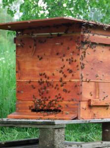 Bieneneinlauf