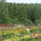 Tag der Kulturpflanzenvielfalt