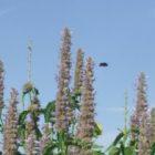 Natur vor Ort - Hummeln und Wildbienen