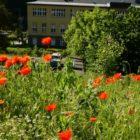 Natur vor Ort  - Was blüht in Tharandt?